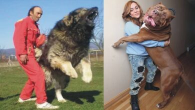Photo of 10 LARGEST DOG BREEDS & SLOWEST ANIMALS IN THE WORLD