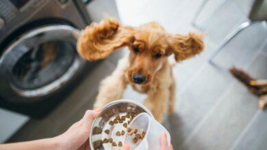 Photo of Grain Free Dog Food