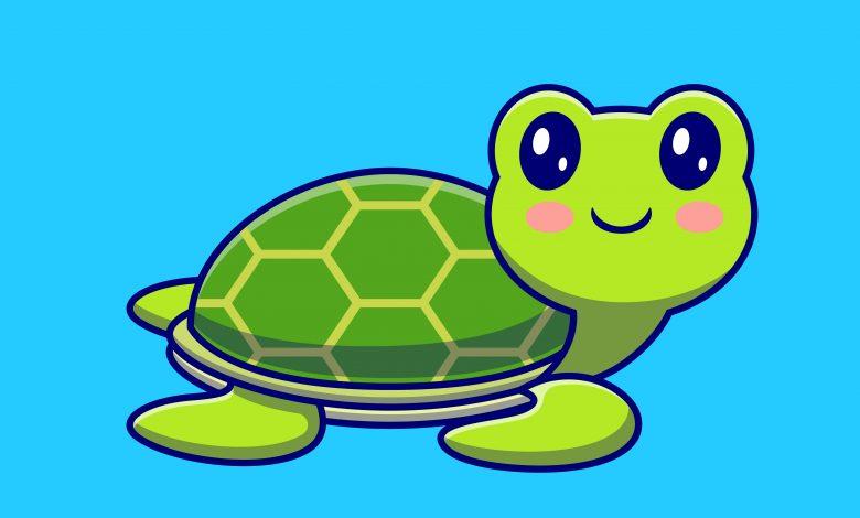 Turtles Drawings